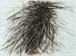 grass tree, 57x75cm: charcoal on paper