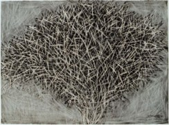 spiky bush, 57x75 cm: charcoal and acrylic on paper