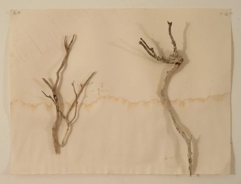 landscape-with-two-trees: found objects pinned to wall
