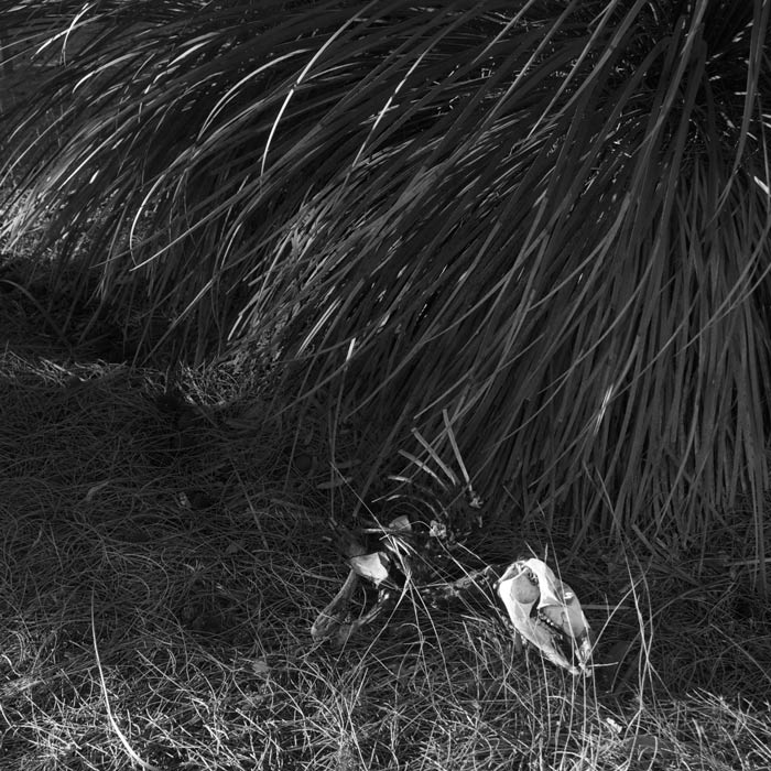 Belinda-Broughton-skeleton-deep-creek