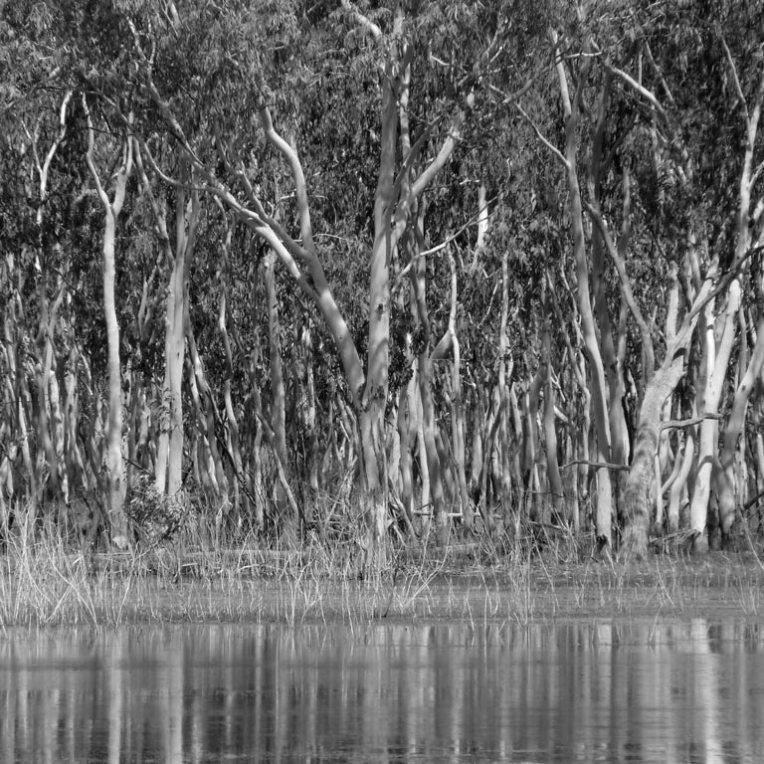 regrowth beside lake