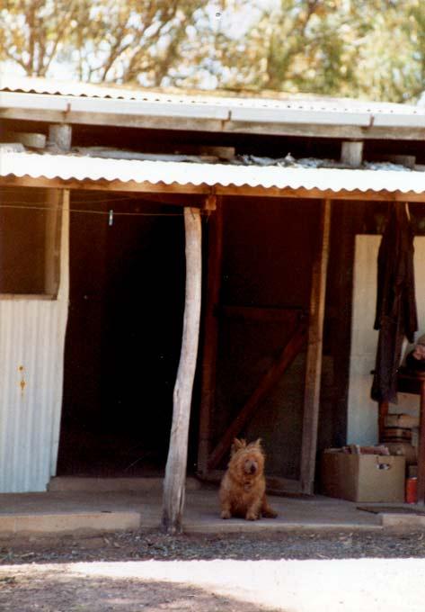 taemas-shed-2