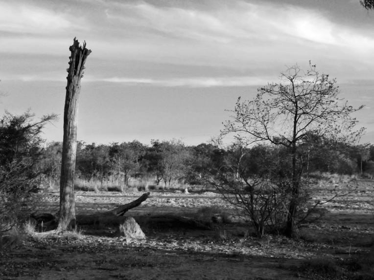 tree-at-toomba