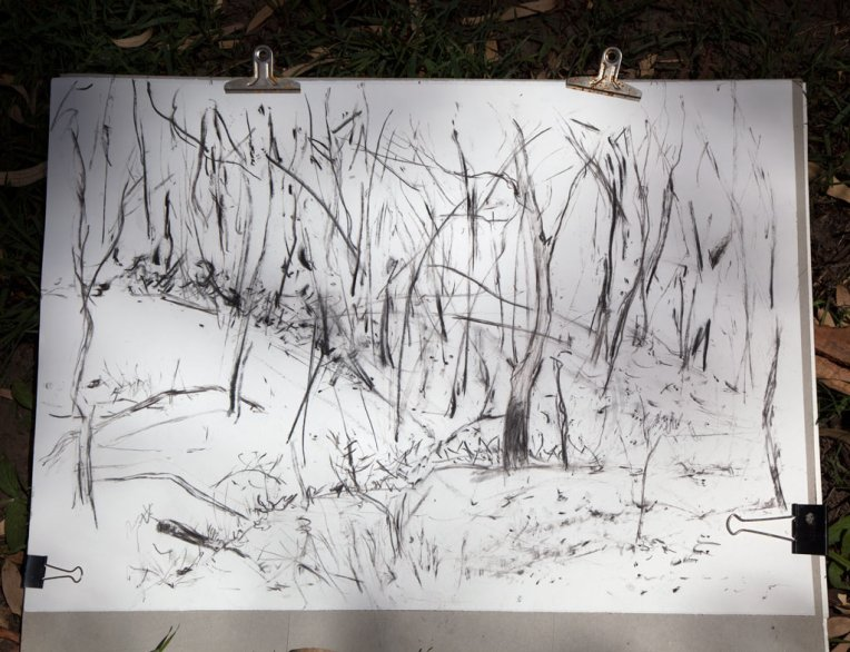 Firegrounds, charcoal (from site) on paper,       Belinda Broughton