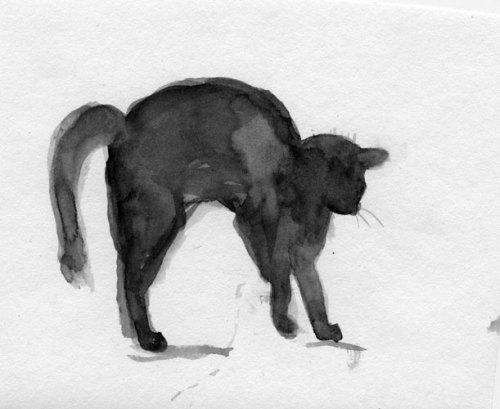 Belinda-Broughton__cat-arching