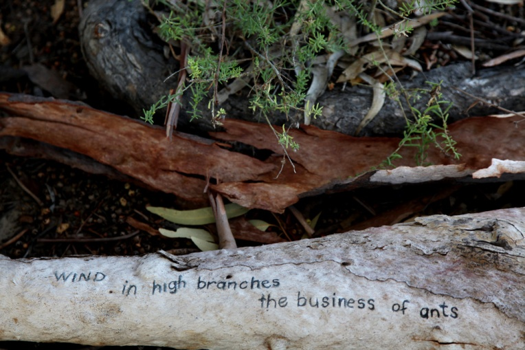 wind-in-high-branches-the-business-of-ants