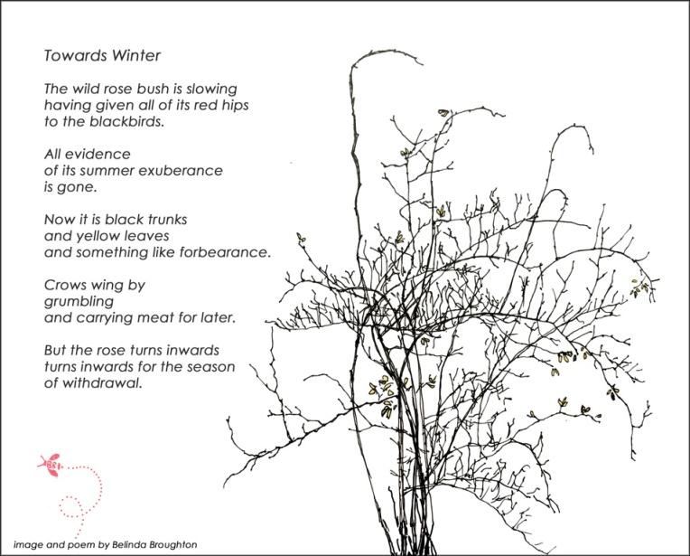 Towards-winter_Belinda-Broughton